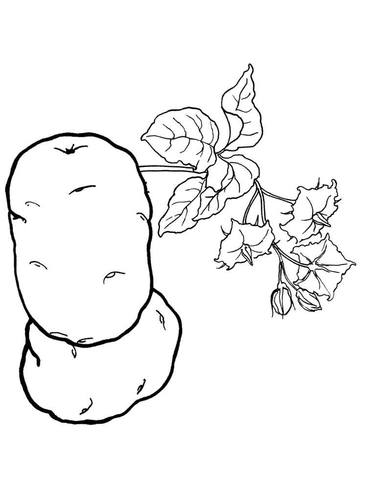 Potato coloring pages Download