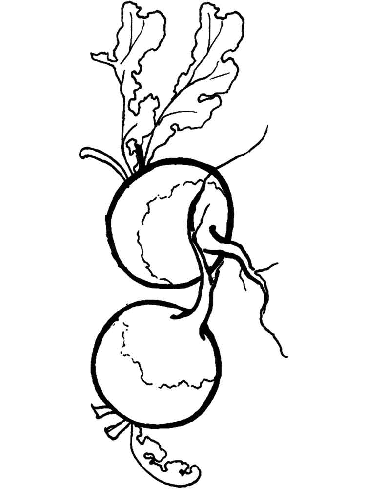 Radish coloring pages Download