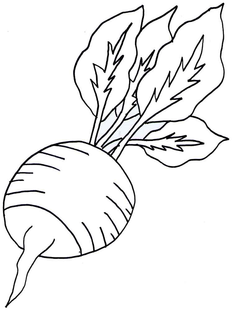radish coloring pages download and print radish coloring