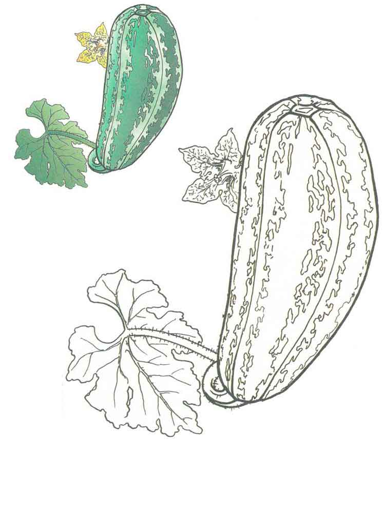 Squash coloring pages Download and print Squash coloring