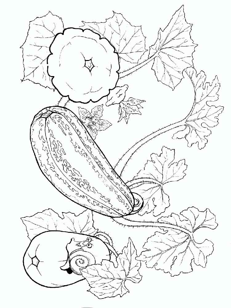 parsley coloring page - squash coloring pages download and print squash coloring