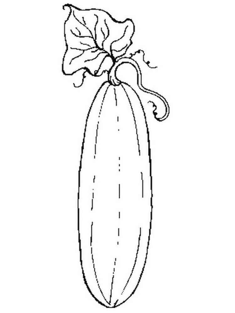 Squash coloring pages Download