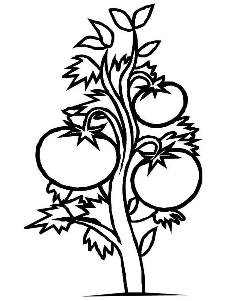 Tomato coloring pages Download