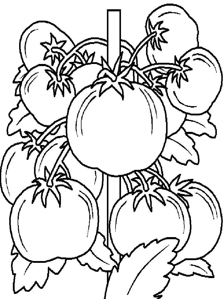 Tomato coloring pages. Download and print Tomato coloring ...