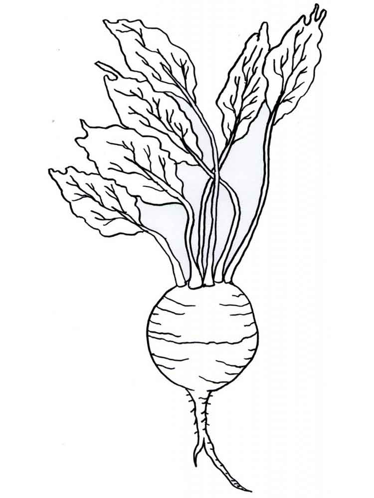 Turnip coloring pages Download