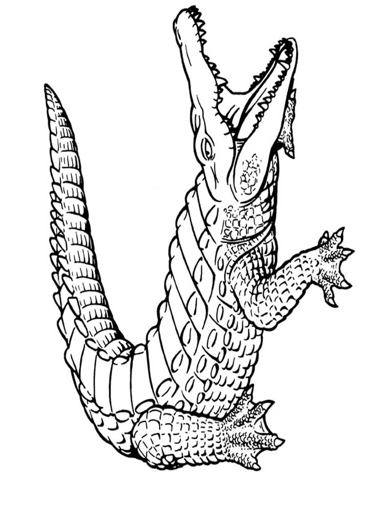 Free Alligator coloring pages. Download and print Deer ...