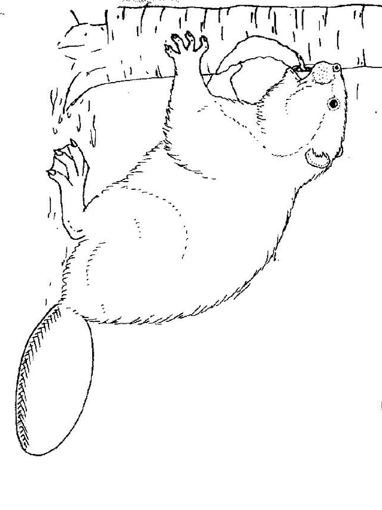 Beaver coloring pages Download
