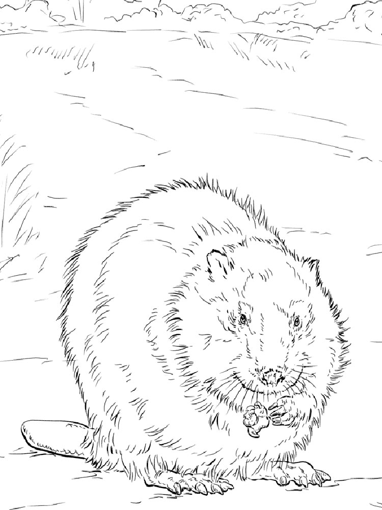 Beaver Coloring Pages Download And Print Beaver Coloring