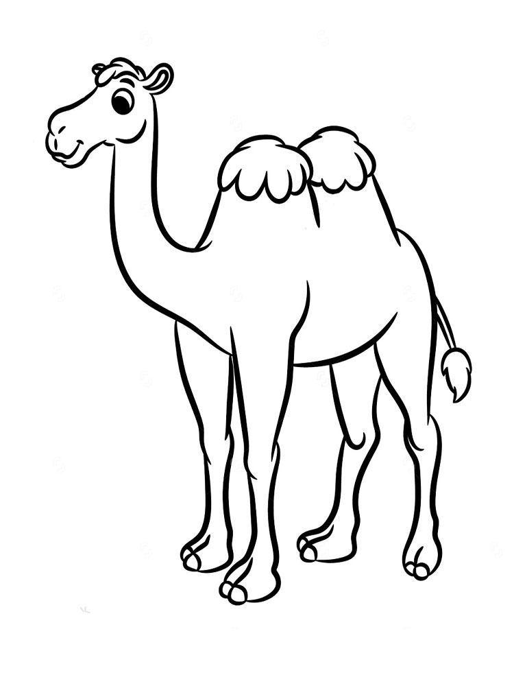 baby camel coloring pages coloring pages