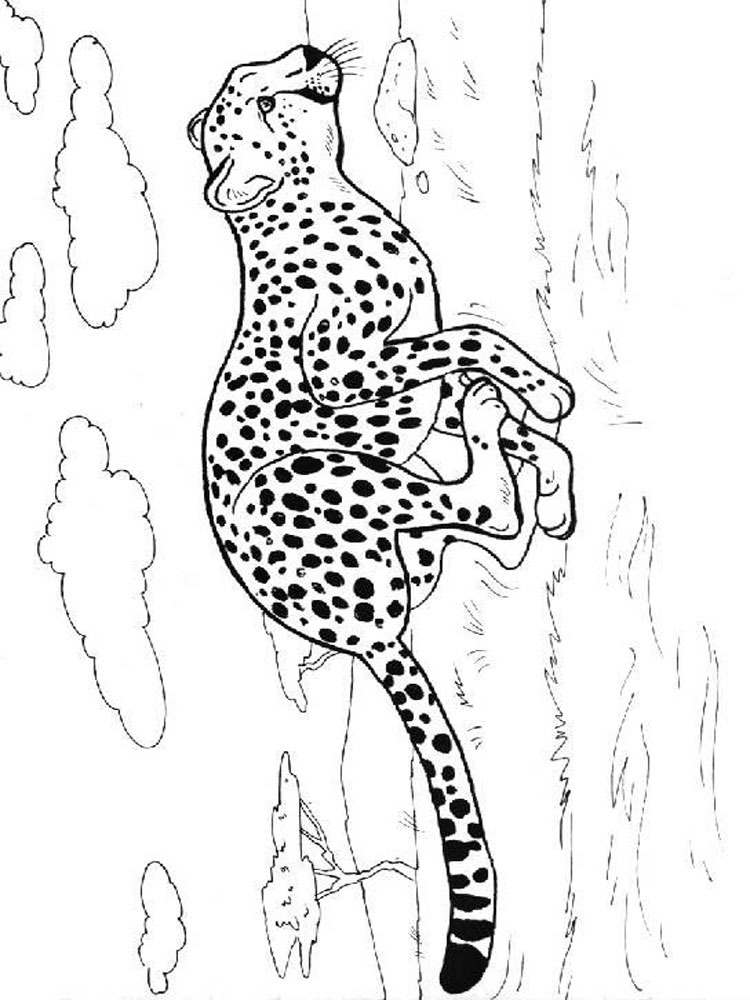 Cheetah coloring pages Download