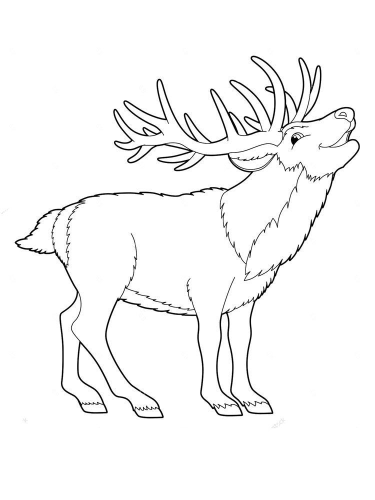 Deer Animal Coloring Pages 339