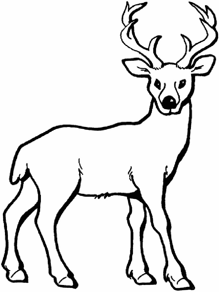 deer animal coloring pages 341 - Deer Coloring Pages