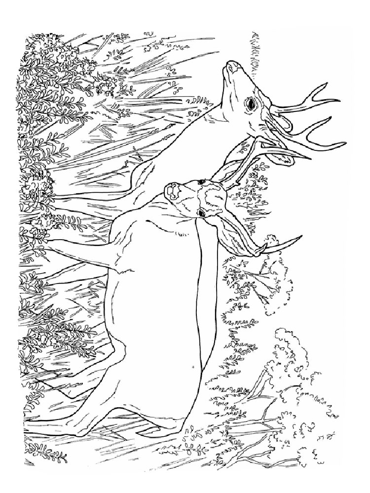 Deer coloring pages. Download and print Deer coloring pages
