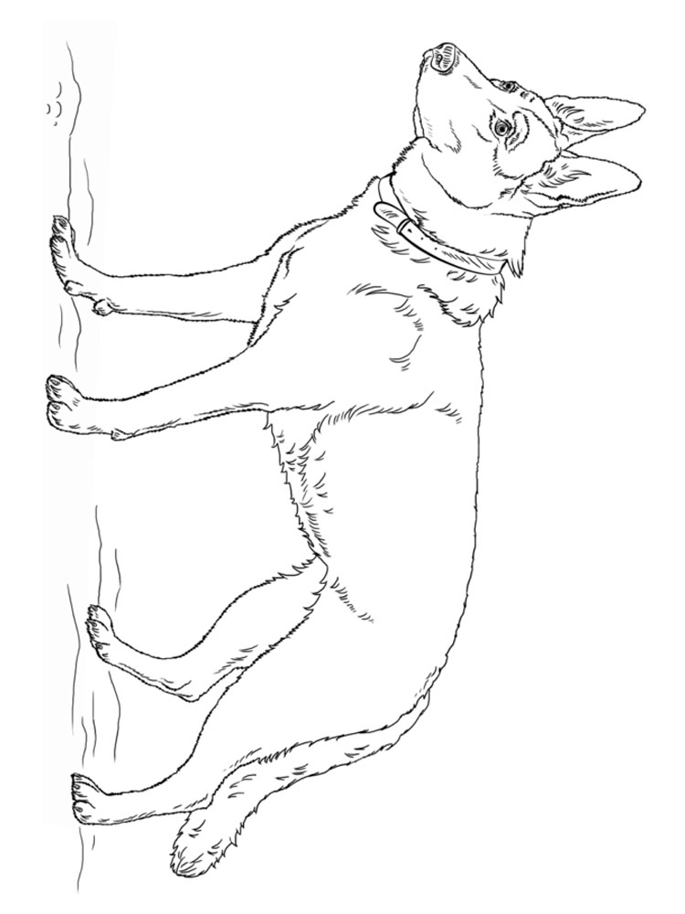Free German Shepherd Coloring Pages. Download And Print German Shepherd  Coloring Pages