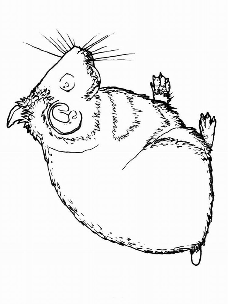 Hamster coloring pages Download