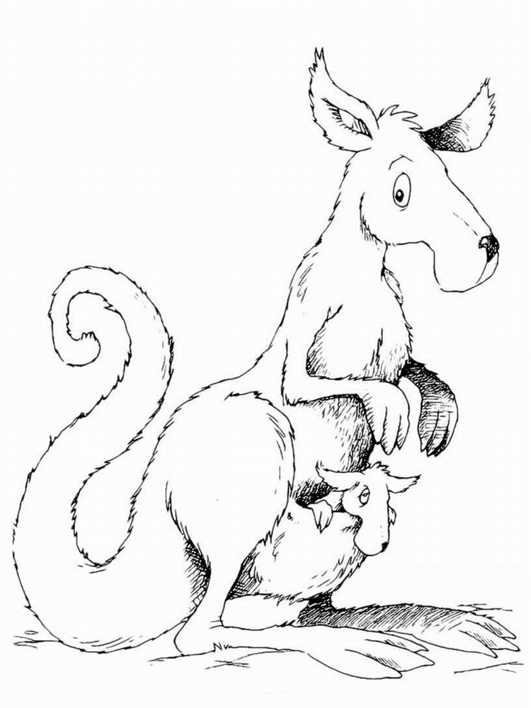 Kangaroo coloring pages Download and print Kangaroo coloring pages