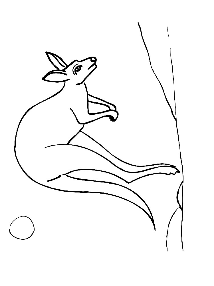 kangaroo animal coloring pages.  Kangaroo animal coloring pages 337 Download and print