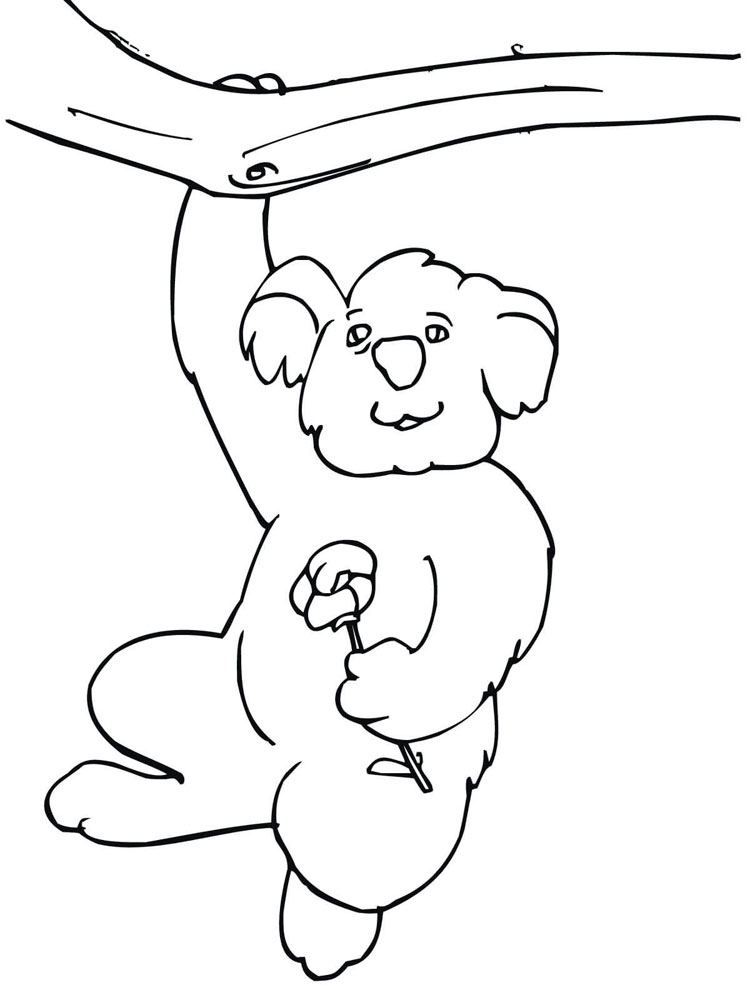 Koala Coloring Pages Download And Print Koala Coloring Pages