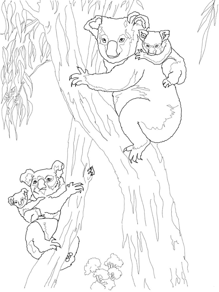 Koala coloring pages. Download and print Koala coloring pages
