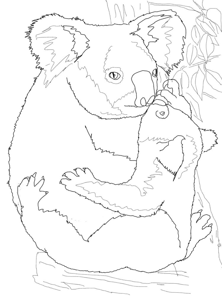 Koala coloring pages Download