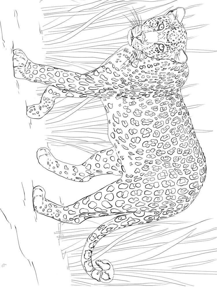 Leopard Coloring Pages Download And Print Leopard Coloring Pages