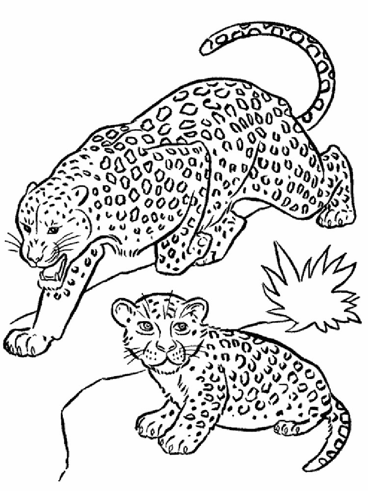 Leopard coloring pages download and print leopard for Leopard print coloring pages