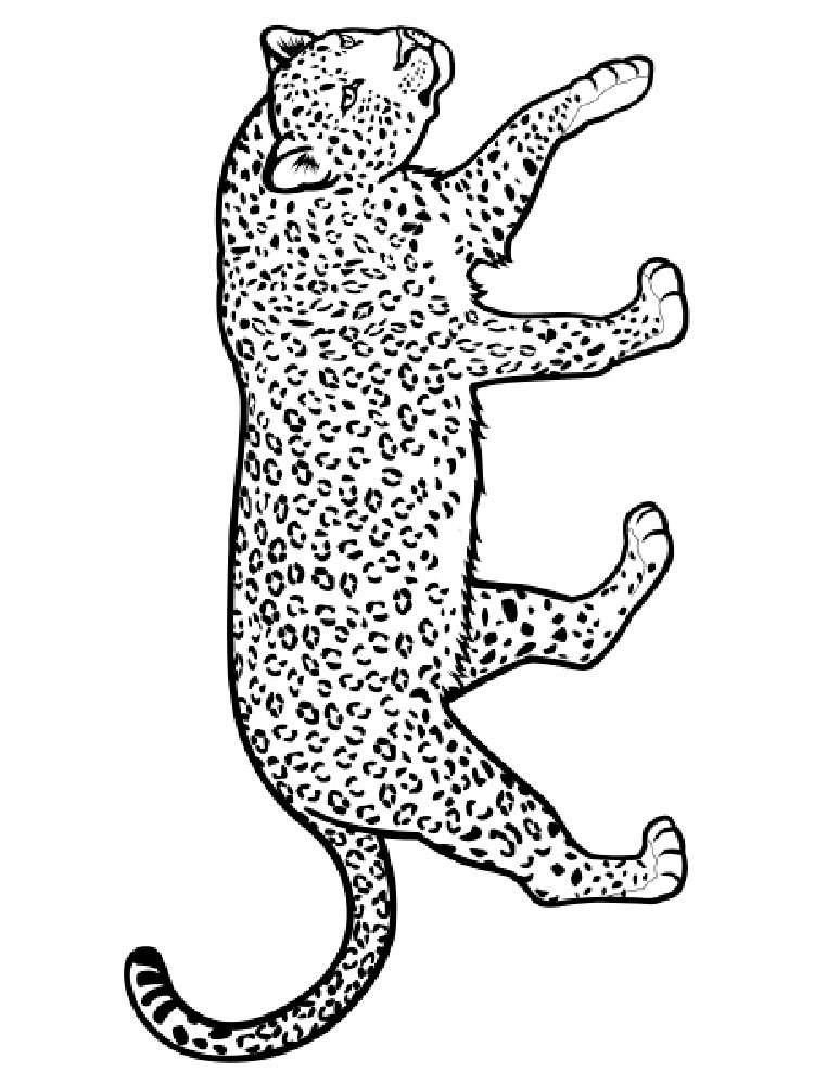 animal leopard coloring pages - photo#40