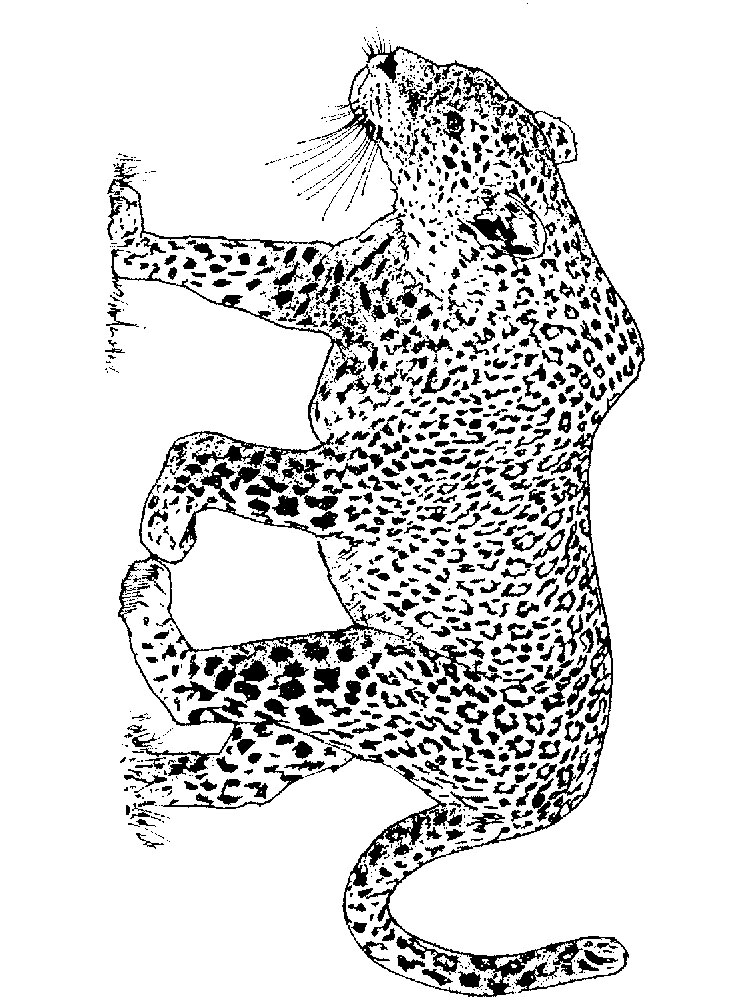 Leopard coloring pages Download