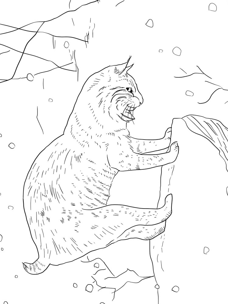 lynx coloring pages free - photo#22