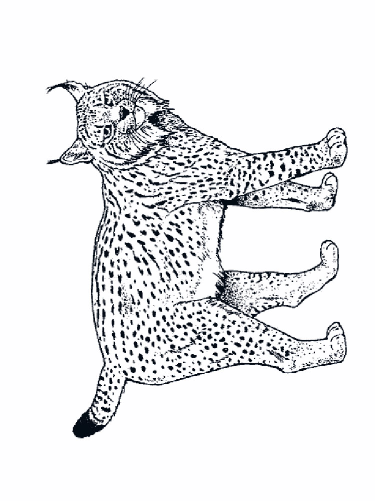 lynx coloring pages free - photo#17