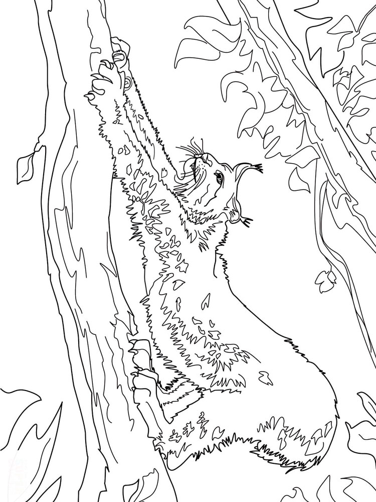 lynx coloring pages for kids - photo#16