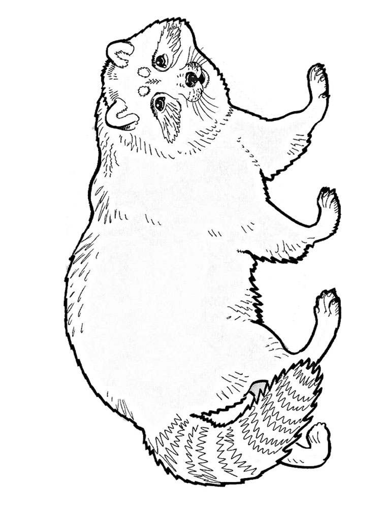 Raccoon coloring pages. Download and print Raccoon ...