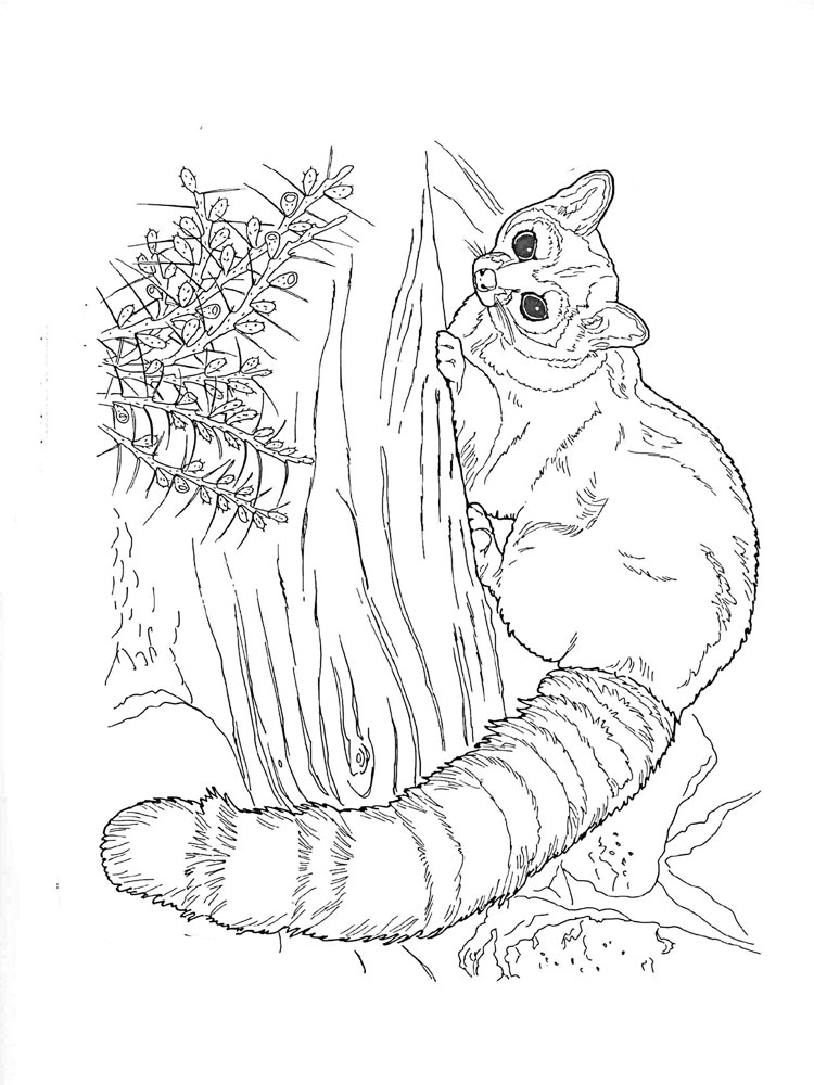 Raccoon Coloring Pages Download And Print Raccoon