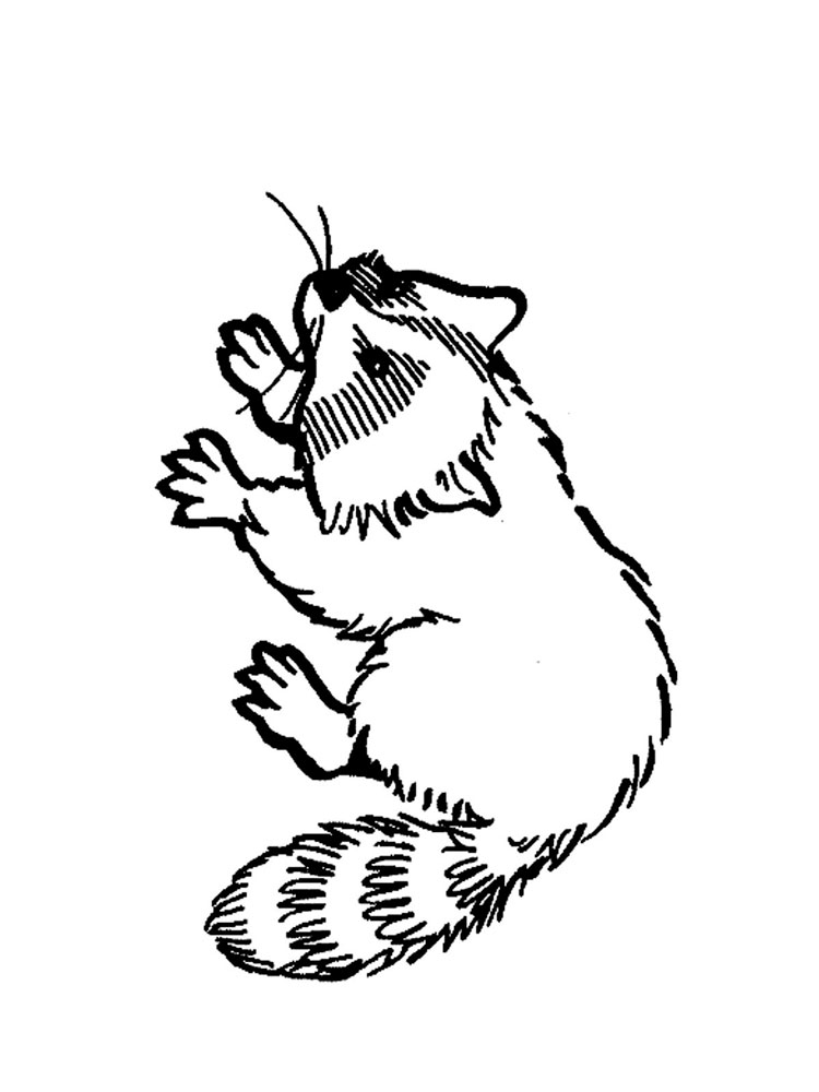 Raccoon coloring pages Download