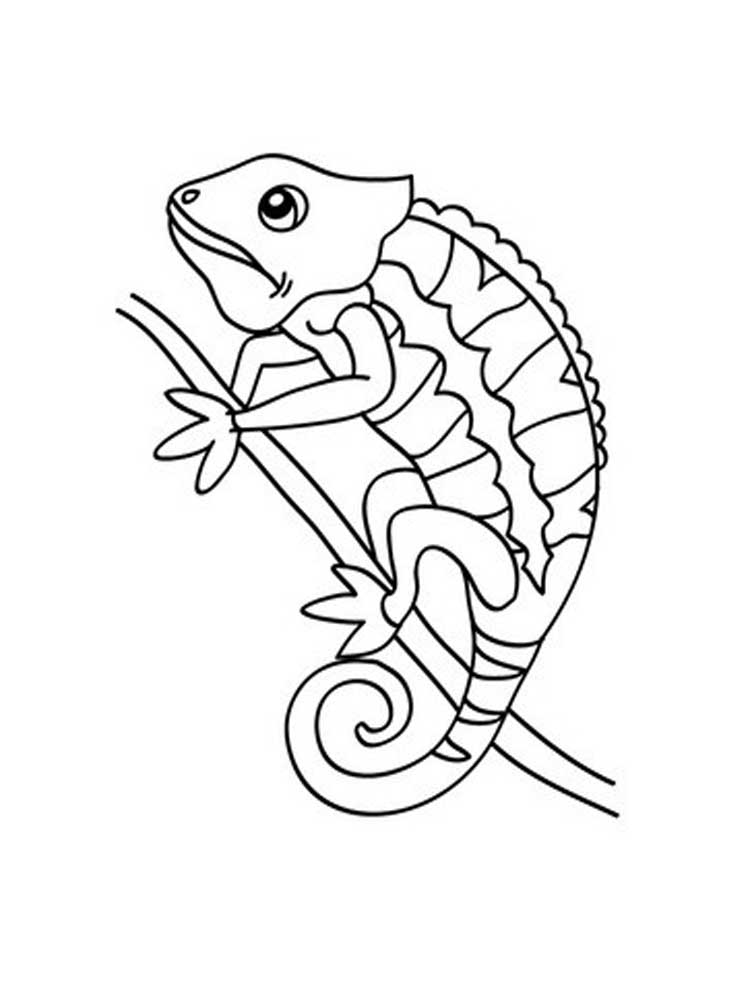 Free Reptile coloring pages. Download and print Reptile ...