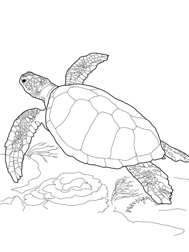 Free Sea Turtle coloring pages. Download and print Sea ...