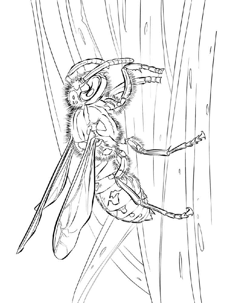 Free Wasp coloring pages. Download and print Wasp coloring ...