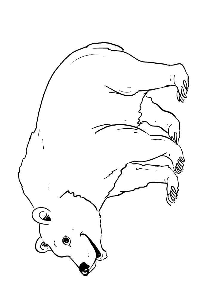 Bear coloring pages. Download and print bear coloring pages