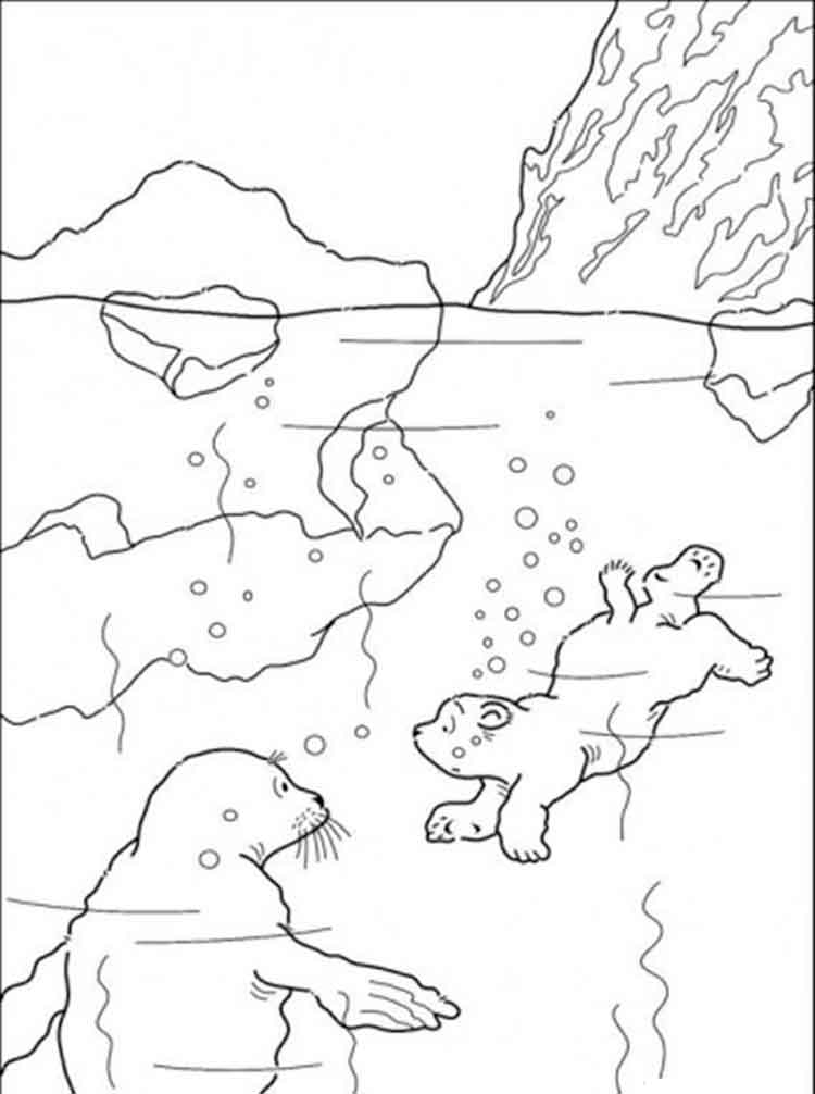 Bear coloring pages Download and print bear coloring pages