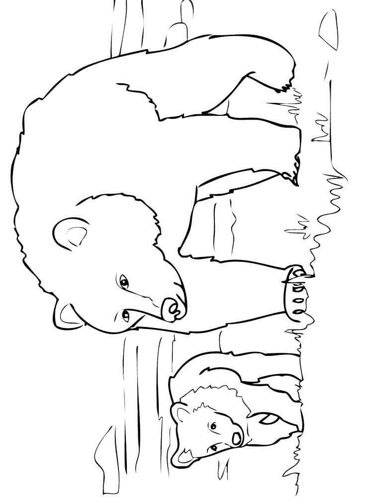 Bear coloring pages Download and