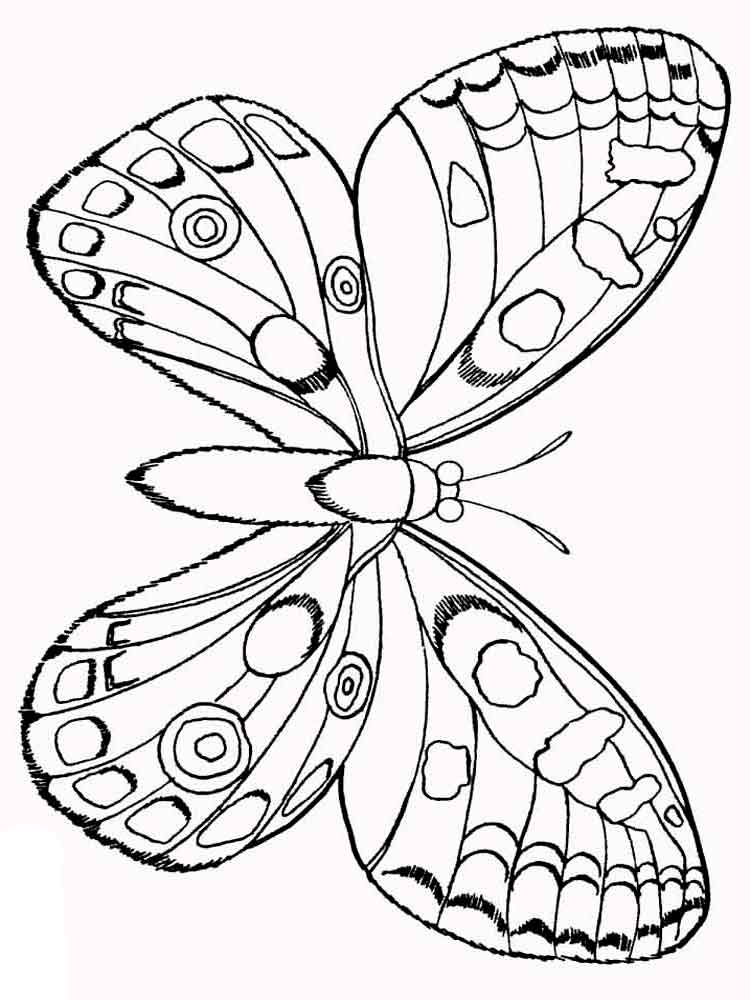 coloring pages animals butterfly 30 - Printable Butterfly Coloring Pages