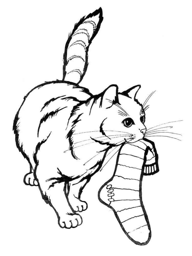 Cats coloring pages Download and
