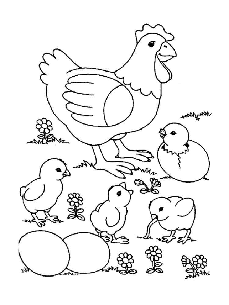 Chicken coloring pages Download