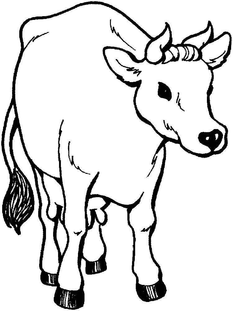 Cow Pictures To Print And Colour – Pusat Hobi