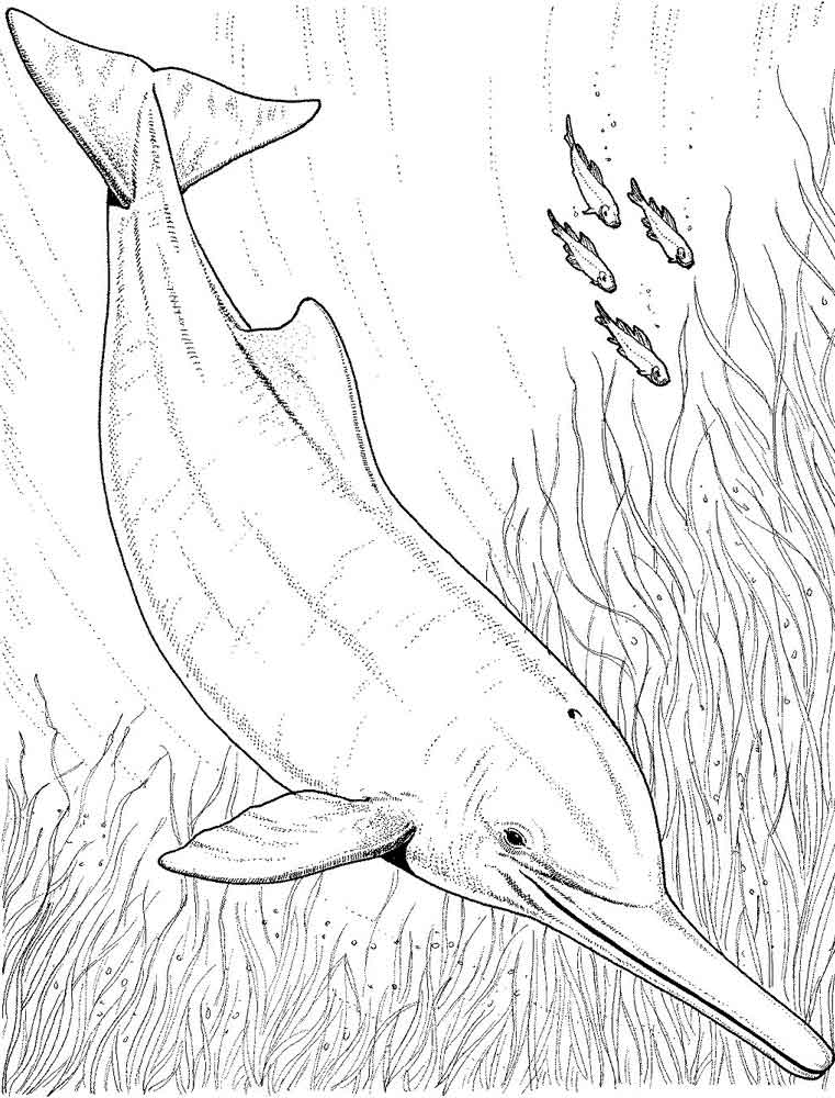 Coloring Pages Animals Dolphin 10