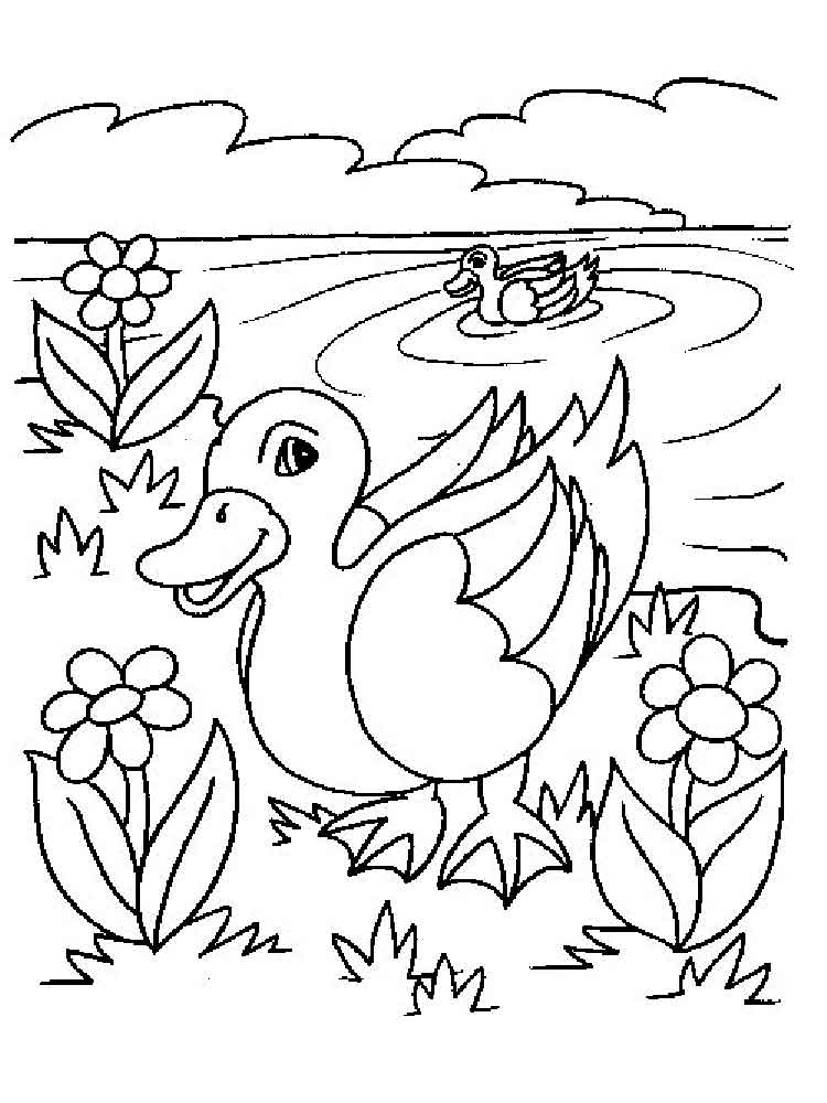 Coloring Pages Animals Duck 12
