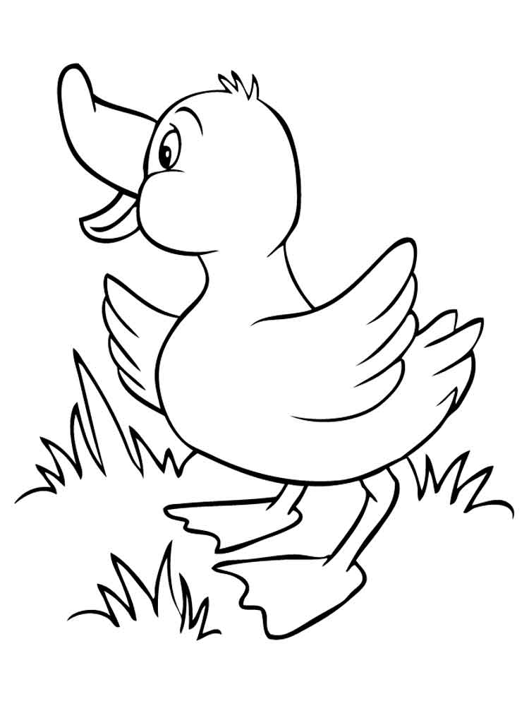 Duck coloring pages. Download and print duck coloring pages