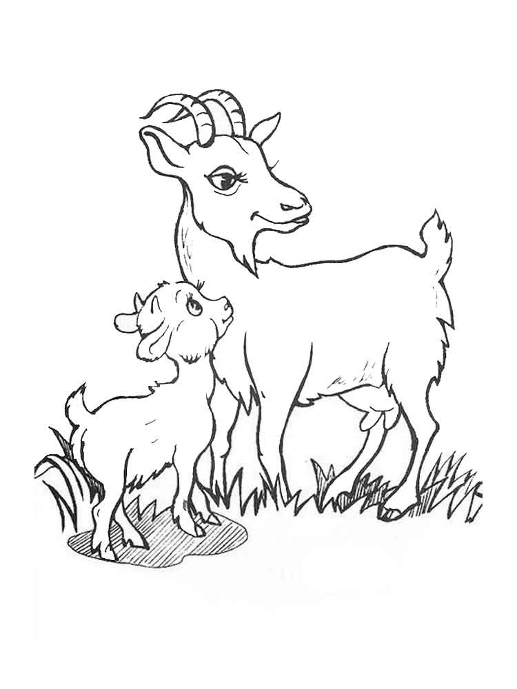 Baby Goat Coloring Pages