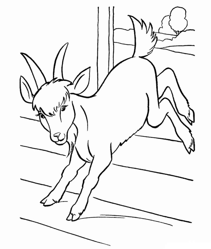 coloring pages animals goat 11