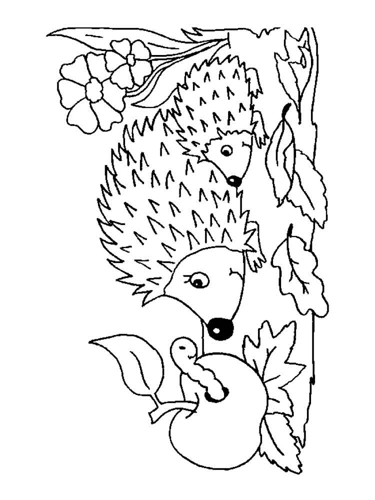 Hedgehog coloring pages Download and print hedgehog coloring pages